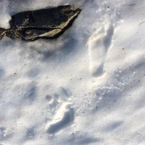 Kompakt og forfriskende snø. Sko er unødvendig på kort avstand.